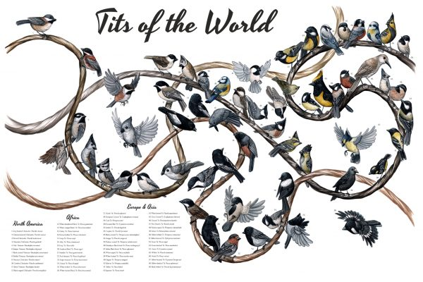 tits-of-the-world