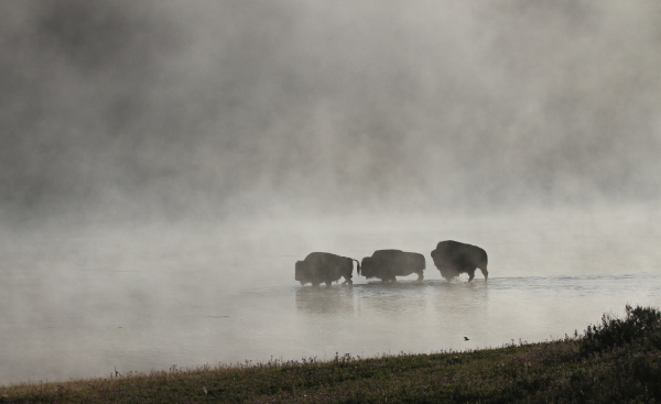 © Yellowstone National Park