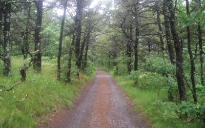 The Wine in the Brine: Walking Cape Cod with Thoreau by Eric D. Lehman
