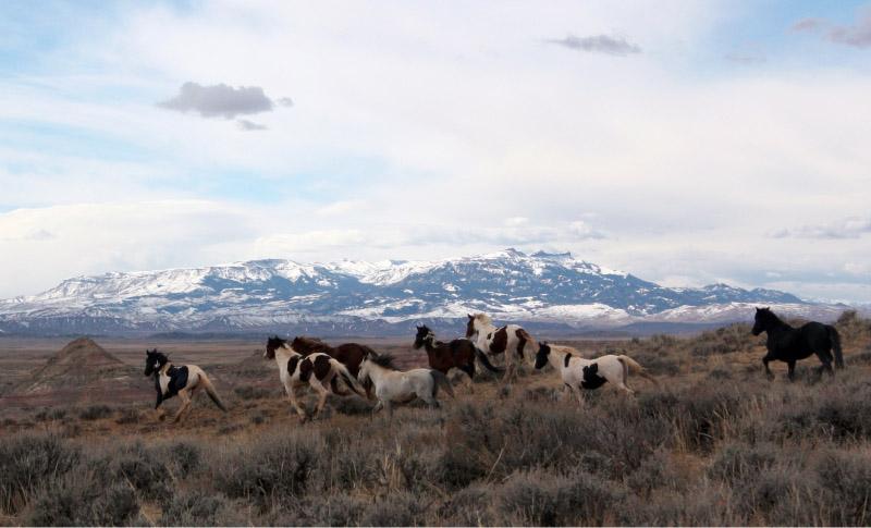 The Souls of Wild Folk by Chad Hanson