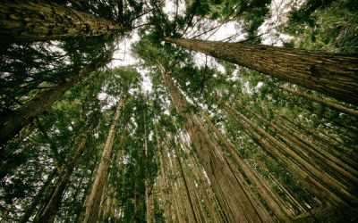 Forest Bathing | A Poem by Saizan Owen